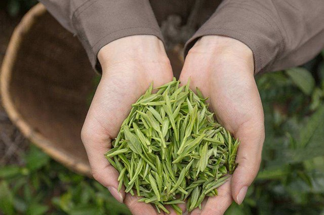 What is Huangshan Maofeng Tea?